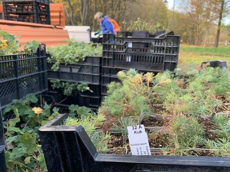 Blick auf die Pflanzen in den Kisten, bevor sie eingesetzt werden.