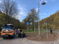 Die ersten Pflanzen sind auf der Fläche am Radweg in Seebach auf den Boden gesetzt.